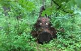 alex197232 пишет:   Чудо-юдо  Гулял с собакой по лесу...в сумерках увидел..зассал и не пошел смотреть че там блестит ..я ж не тупой.., а это были глаза.. Утром пошел еще раз, уже не так страшно..))) Кто-то пеньку глаза из жестянок приделал, красава!!