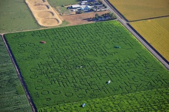 Крупнейший в мире природный лабиринтCool Patch Pumpkins,занесенный в Книгу рекордов Гиннесса, располагается на кукурузном поле площадью более 180 тысяч квадратных метров у американскогогорода Диксон,штат Калифорния.Период работы:с 15 сентября по 5 ноября  Лабиринты на кукурузных полях— Corn Maze —есть во многих американских штатах и европейских странах. Часто их устраивают не просто ради забавы, а как популярный объект агротуризма.  Проходы между злаков могут делать так, чтобы, глядя сверху, можно было видеть различные сюжетные рисунки, надписи, портреты и т. д. Иногда, чтобы привлечь посетителей, организаторы устраивают целые представления в стиле фильмов ужасов.