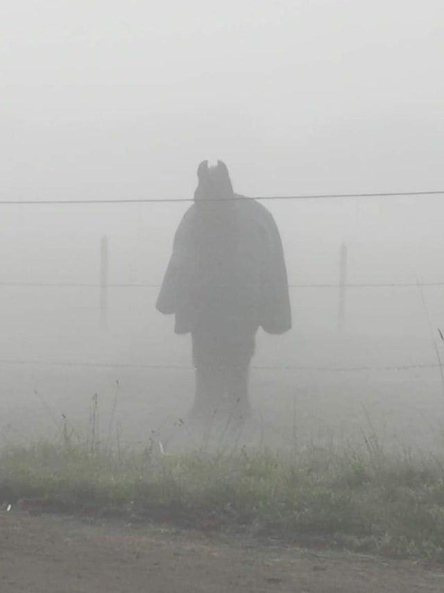Batman en la niebla es en realidad un caballo en popon.Autor: u / SoVeryKerry