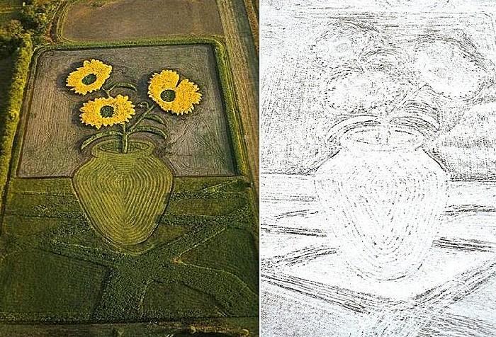Рисунки на полях: подсолнухи летом и зимой.  Более 30 лет американский художник в прямом смысле слова пашет на ниве изобразительного искусства, то и дело откапывая новые приемы. Сам автор называет необычное сельскохозяйственное творчество «земельными работами» («Earthworks»). Среди его рисунков на полях - портреты, натюрморты и (что довольно забавно) пейзажи.