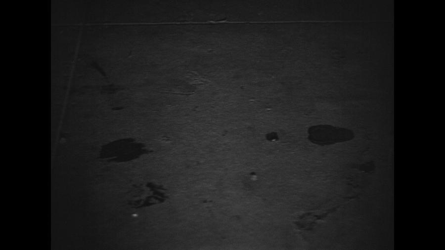 Кошачьи следы превращаются в следы женских туфель