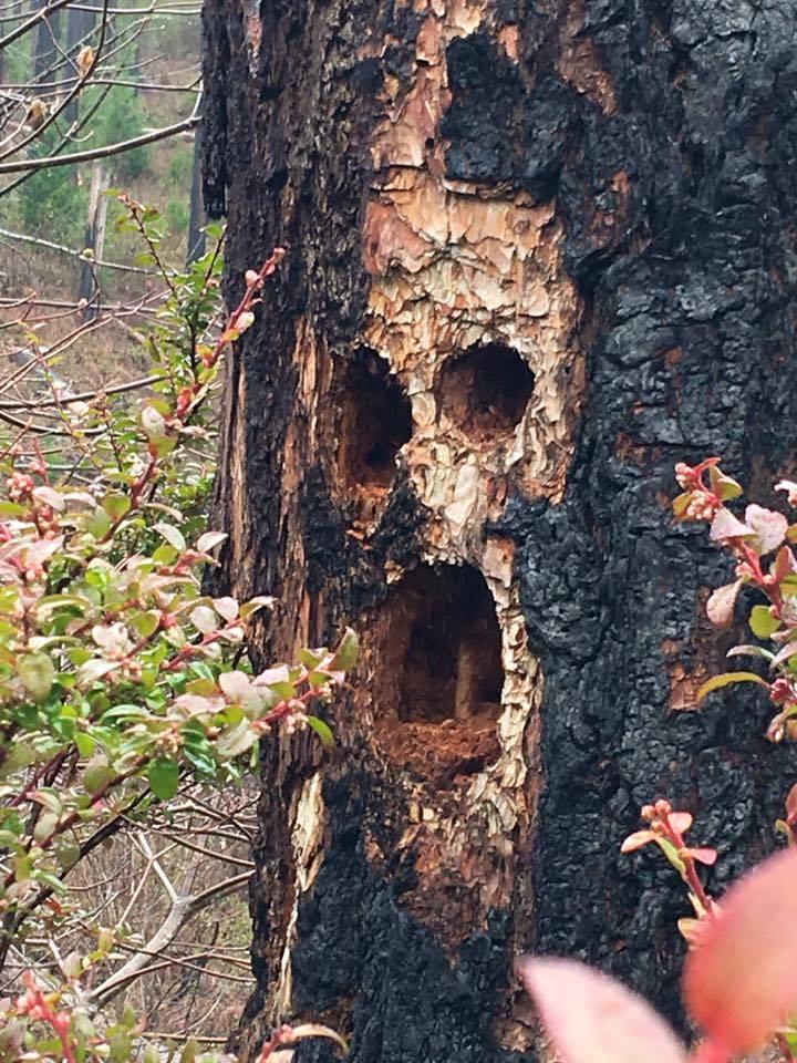 Pájaros carpinteros выдолбили dupla en el árbol. Traducido del servicio de «Yandex.Traductor»