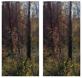 La silueta de los árboles y de los arbustos. Traducido del servicio de «Yandex.Traductor»