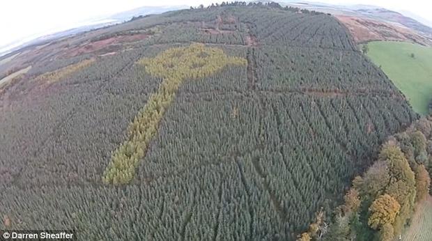 """Насаждение, достигающее более 100 метров в длину, заметно исключительно с воздуха. Оно расположено в северной части Ирландии. Крест """"сформирован"""" из крон деревьев более светлого оттенка, нежели у окружающей растительности. Мужчина по имени Лиам Эммери (Liam Emmery) специально высадил деревья двух типов таким образом, чтобы их кроны сформировали древний символ."""