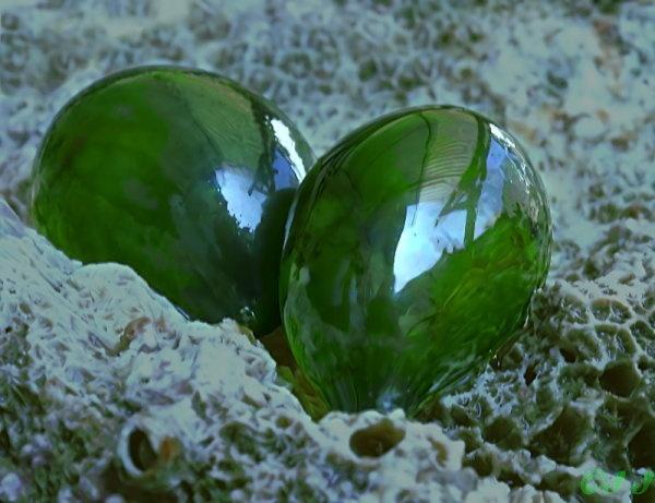Валония пузатая -видзелёных водорослей. Известна под названиями «водоросль-пузырь» и «глаз моряка». Встречается по всему миру в тропических и субтропических областях.  По форме может варьировать от сферического до овального, цвет от травянисто-зелёного до тёмно-зелёного. В воде может казаться серебряным, цвета морской волны и даже черноватым. Интенсивность цвета определяется количеством хлоропластов в клетке. Поверхность водорослей зеркально-блестящая, как стекло.